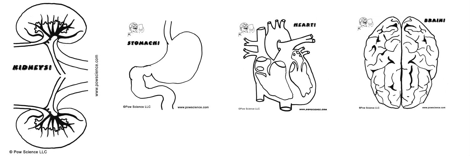 Human body parts coloring pages for kids - photo#15